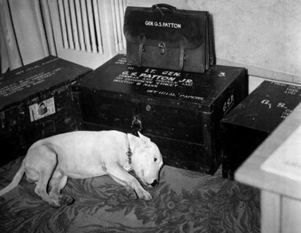Mourning Dog