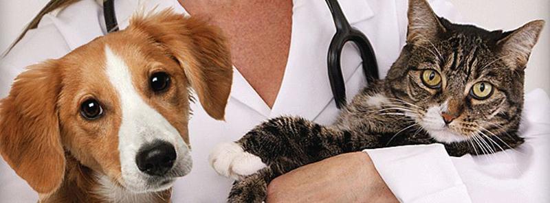become veterinarian